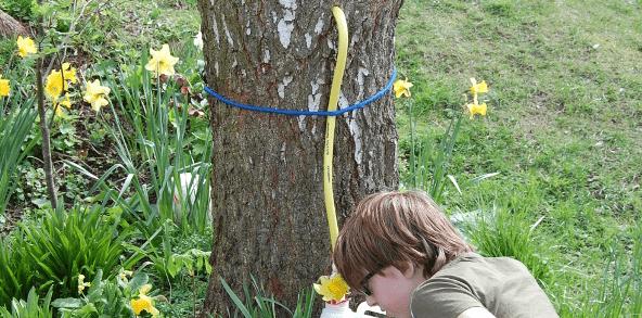 récolter de la sève de bouleau
